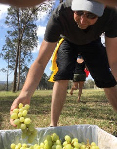 Wine activities picking grapes on a great amazing race around Southern Highlands or Hunter Valley wineries